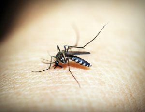 Mücke / Malariaerkrankung